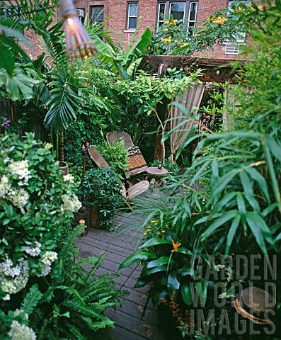 Tropical garden in uk tropical gardens pinterest for Tropical courtyard garden design