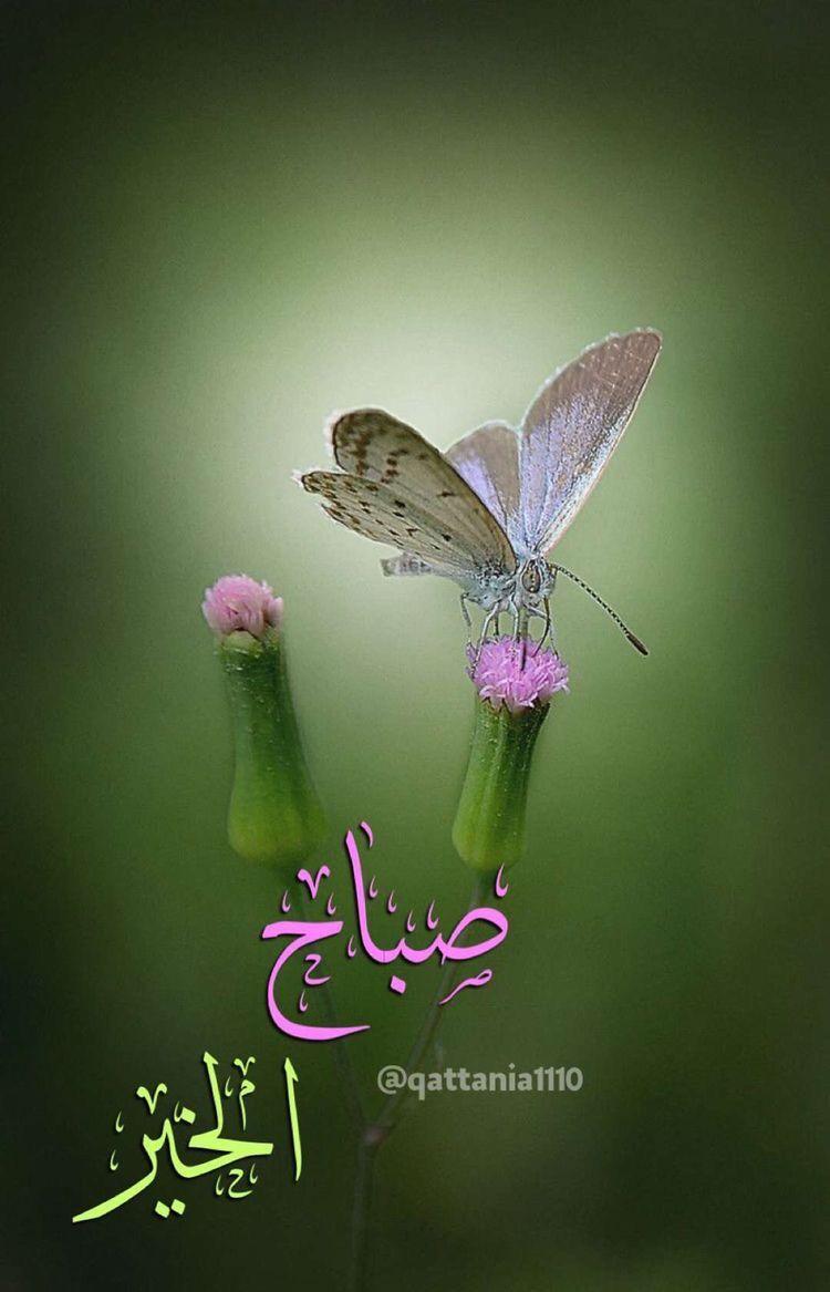 Pin by ALI🌹علي on صباح الخير-Good morning   Good morning