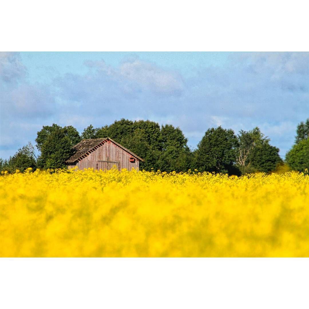 #nature #lakeus #mtvsaa #kesä #seinäjoki #summer #naturelover #agriculture #ourfinland #visitseinäjoki #weareinfinland #parhaataamut #thebestofscandinavia #agriculture #maatalous