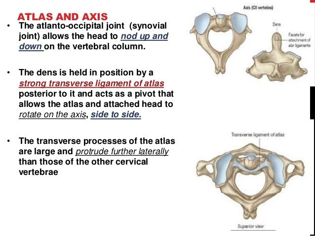 Image Result For Atlas And Axis Actions Anatomy Pinterest