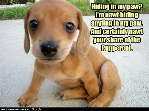 Cutegreggator: Adorably Funny Puppies To Celebrate National Puppy ...