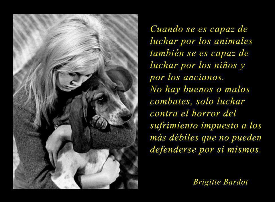 Citas Sobre Injusticias Sobre Animales Google Search