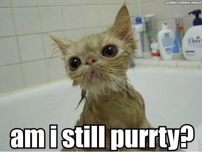 Wet Cats Look So Funny With Images Pretty Cats Cats And