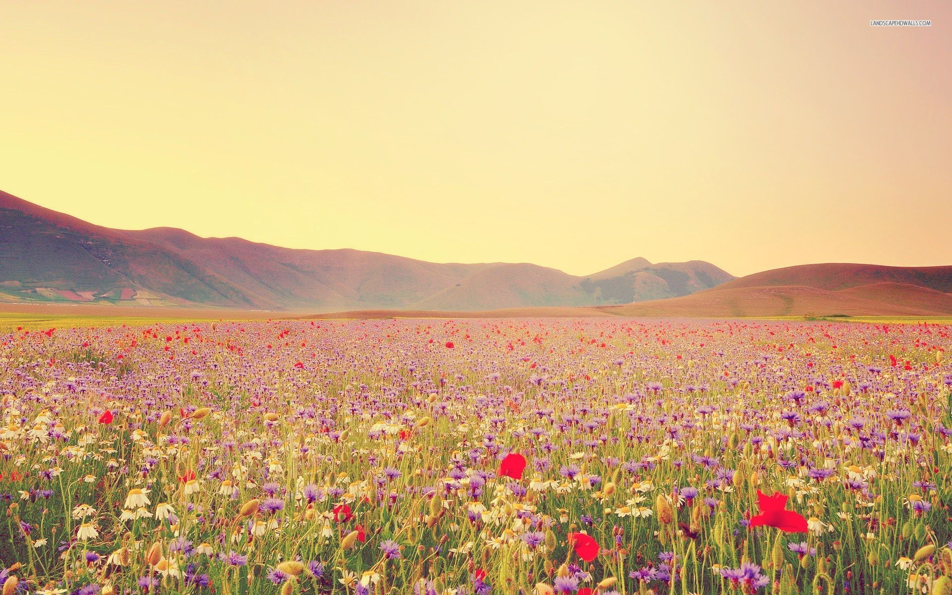 Wildflower Field Wallpapers Full Hd With Hd Desktop 1920x1200 Px 539 93 Kb Twitter Cover Photo Facebook Cover Cover Pics