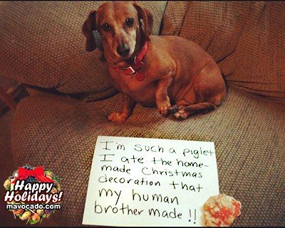 Click Share  Because every time you Share a post, a puppy smiles! Veggies are H... @ http://www.facebook.com/movacado