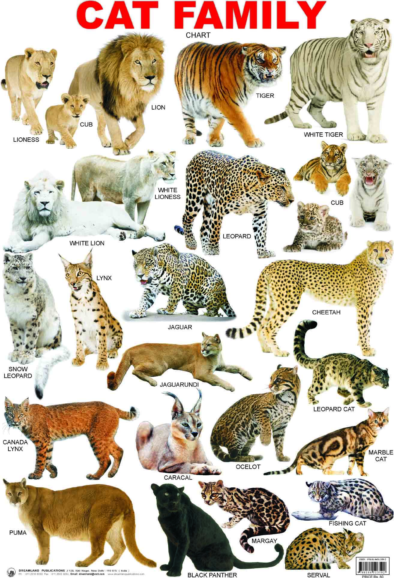 science Cat Family Cat breeds chart, Animals wild, Animals