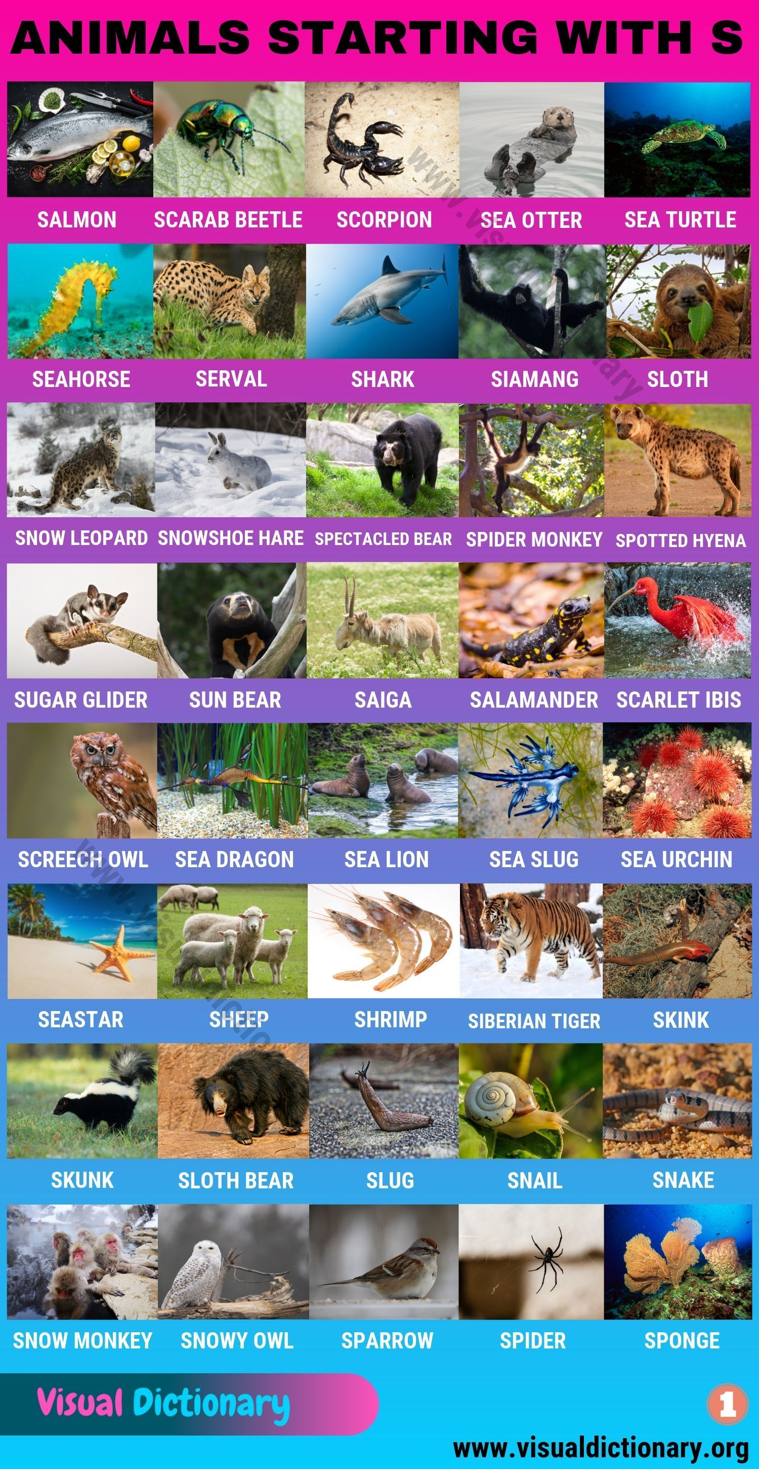 Animals That Start With S Huge List Of 120 Animals Starting With S Visual Dictionary Visual Dictionary Animals Animals Name In English