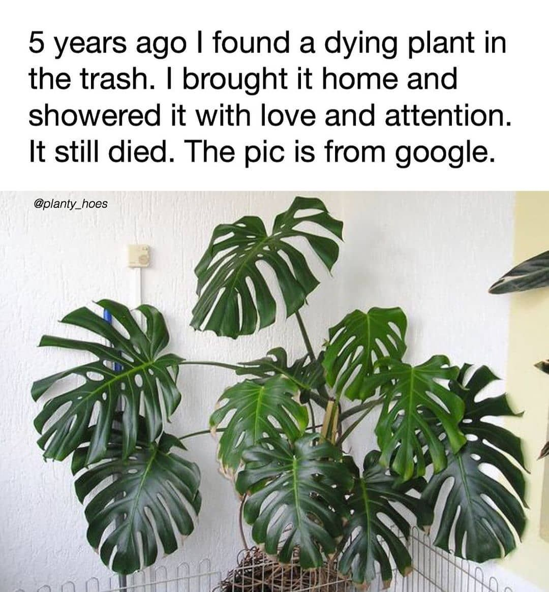 Olivra Homedecor On Instagram Totally Me Hahaha Anyone Can Relate To Giving Your Plants Love And Attention And They St In 2020 Gardening Memes Plants Dying Plants