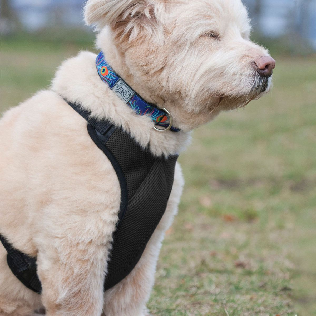 Vented Vest Harness Medium By Rc Pet Products Pets Fur Babies Canine