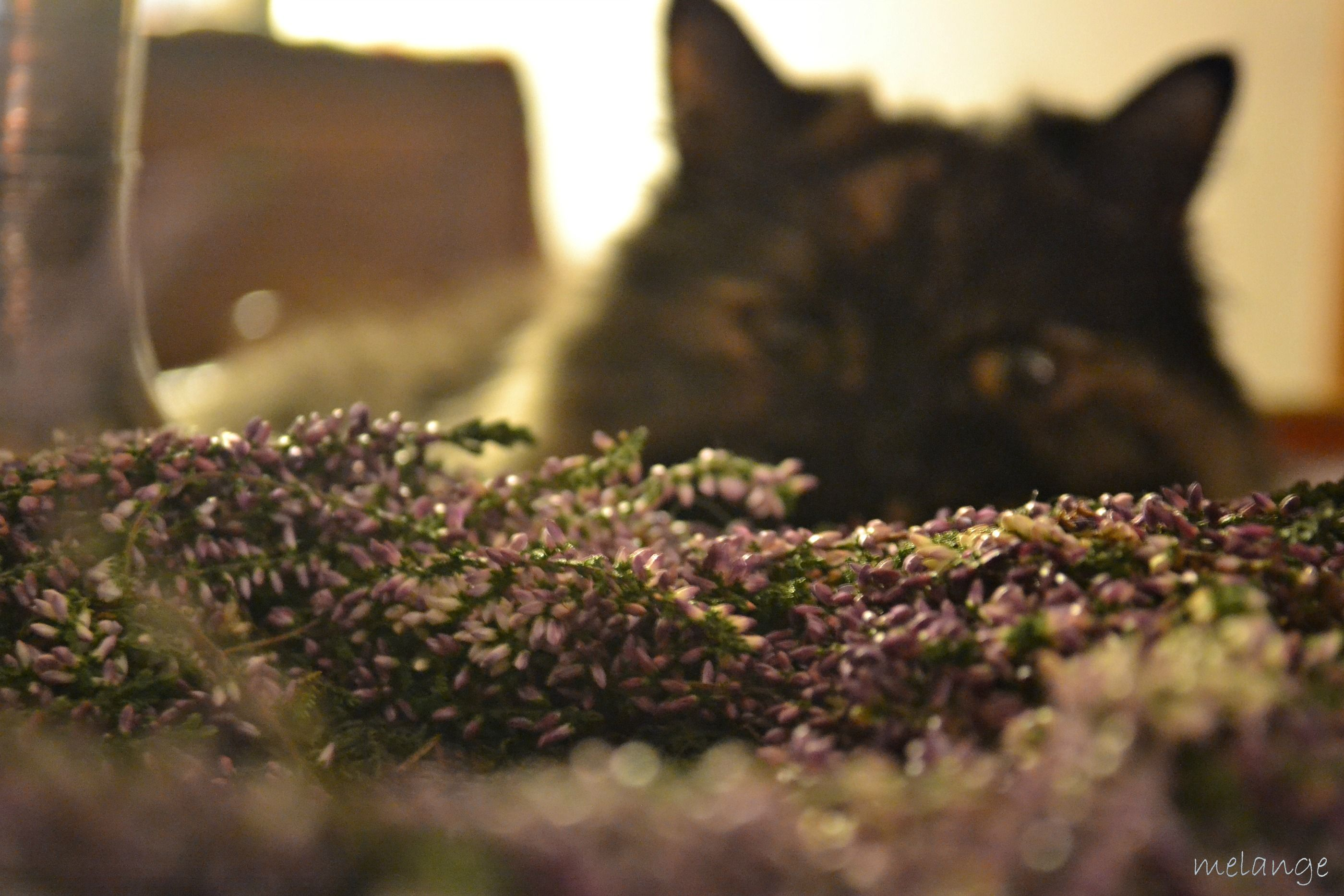 Mollie B Cat Tails Ii Tierillustrationen Katzen Kunst Katze Malen