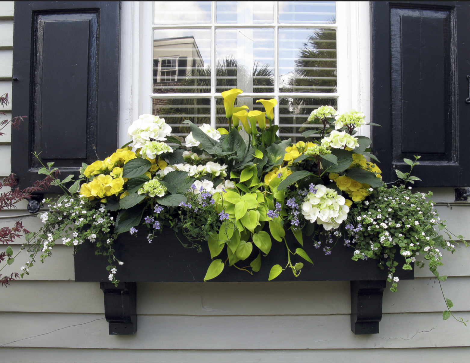 Amazing window box with yellow flowers yellow calla for Flower garden box ideas