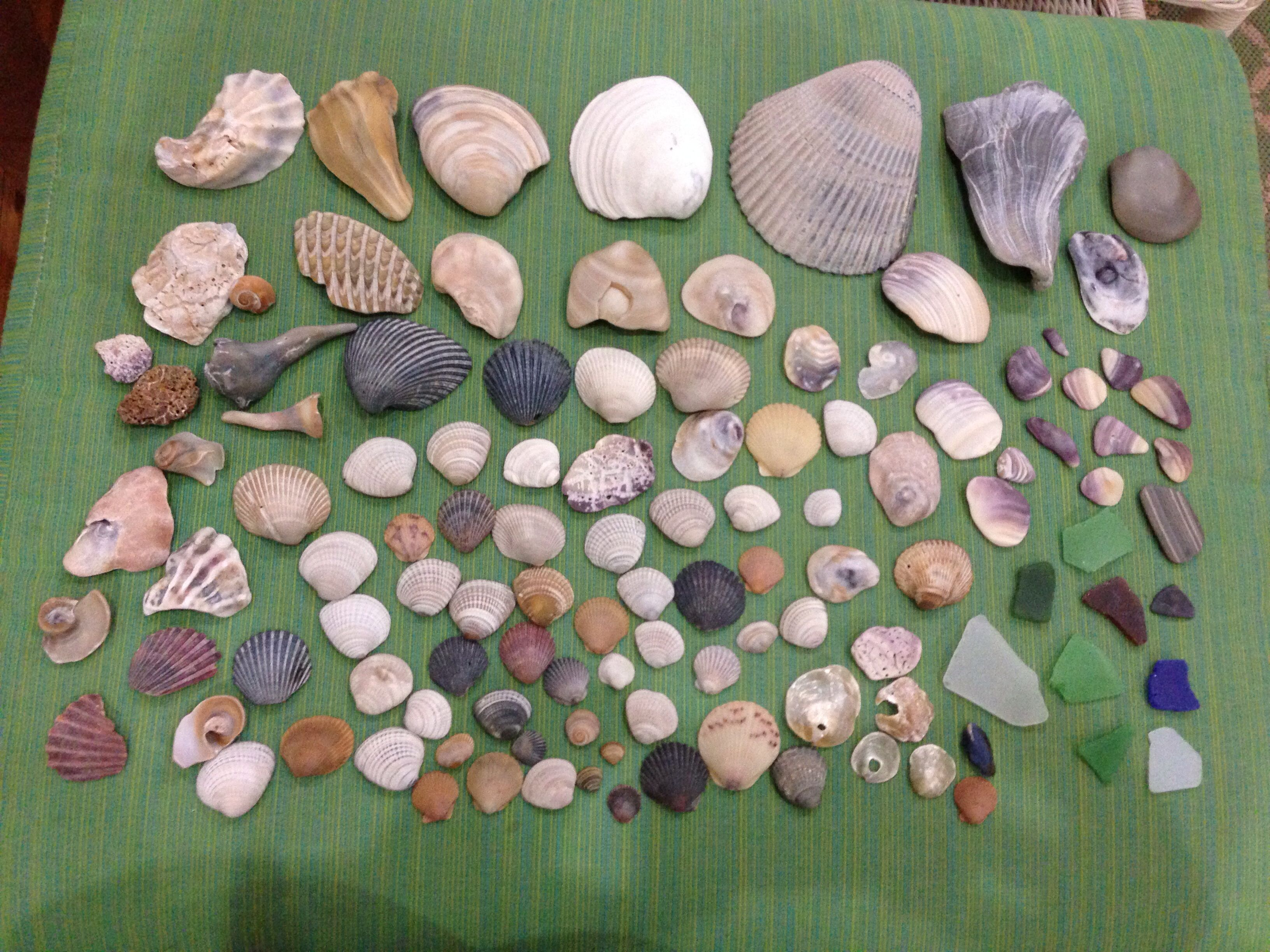 Shells Sea Glass Finds At Coquina Beach Nc Outer Banks Obx