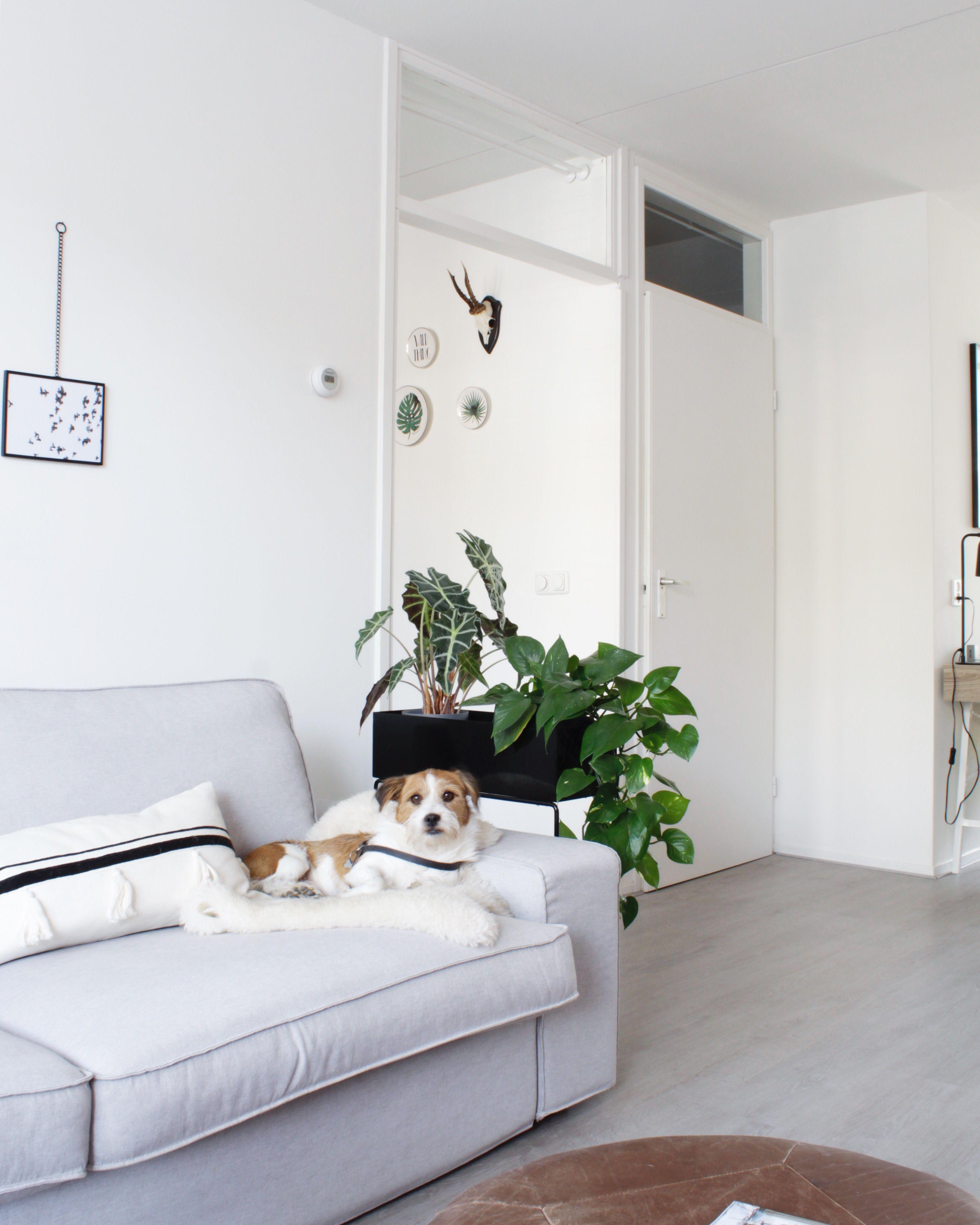 Graues Kivik 3 Sitzer Sofa Von Ikea In Einem Frischen Skandinavischen Interieur In 2020 Home Decor Furniture Home