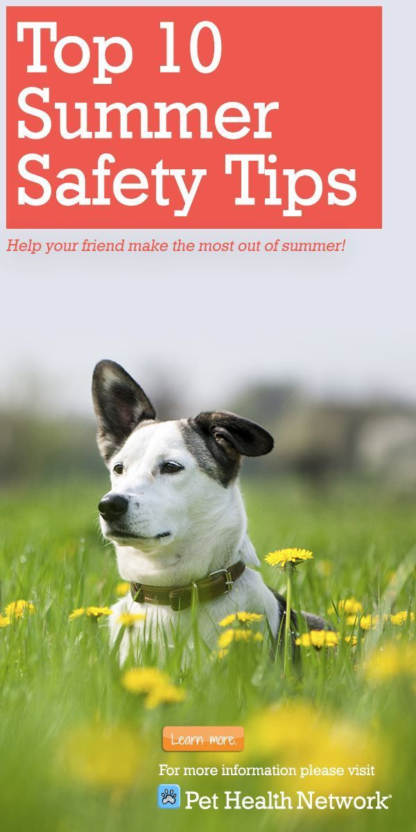 Our Top 10 Summer Safety Tips for Dogs Summer safety
