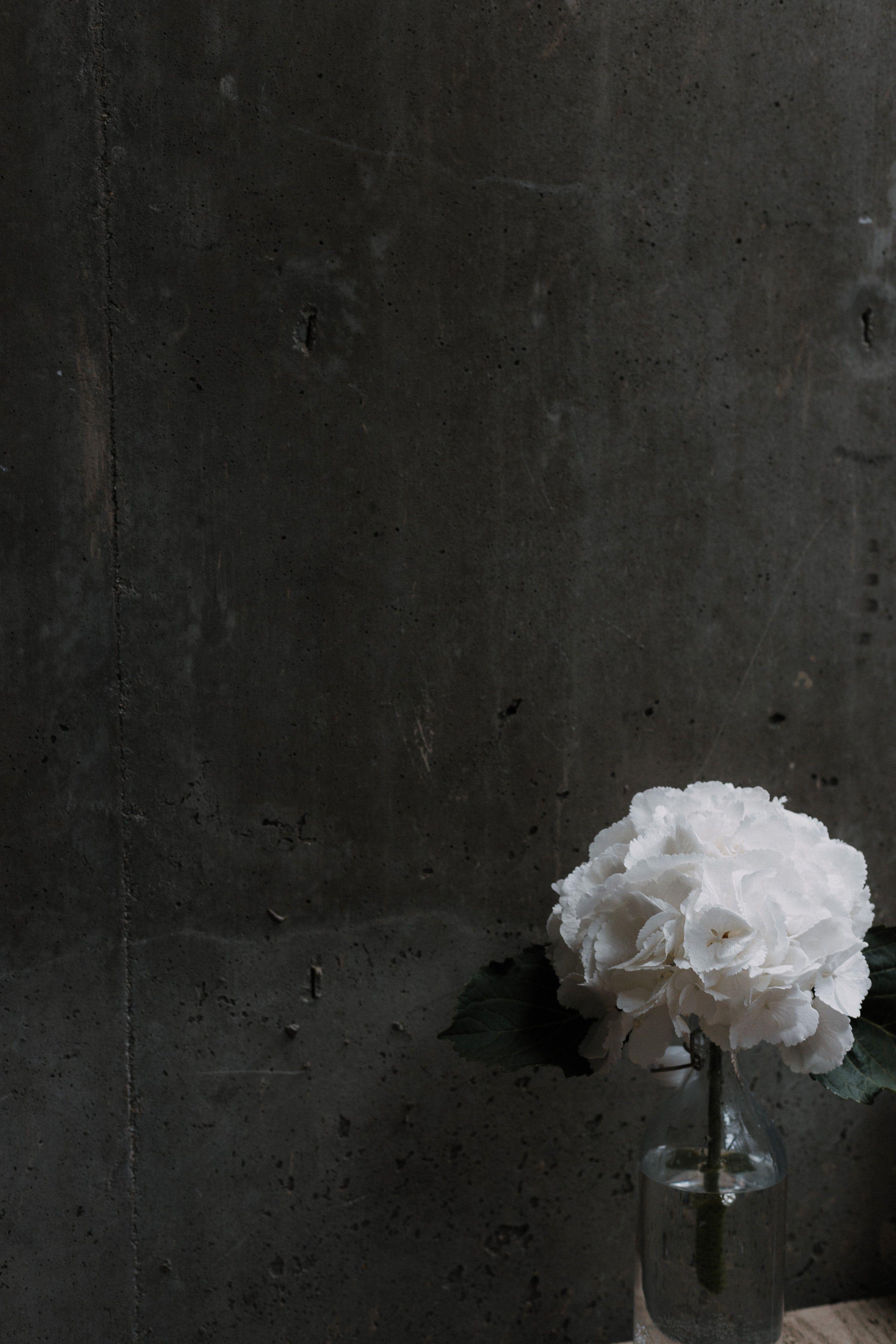 white petaled flowers beside gray wall Home decor tips