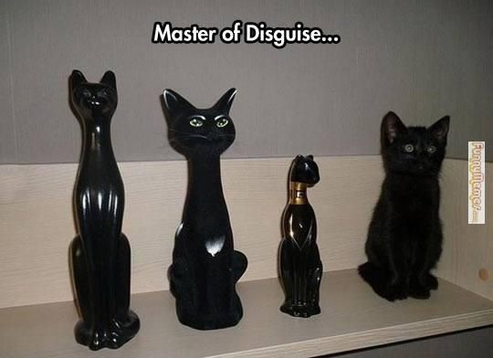 Cat memes Master of disguise...