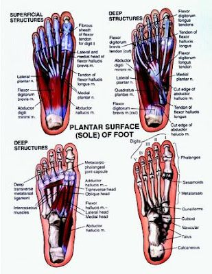 Here Is The Anatomy Of Your Foot If You Begin To Experience