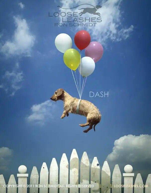 Пин от пользователя Nata Pavlushina на доске фото собак ...