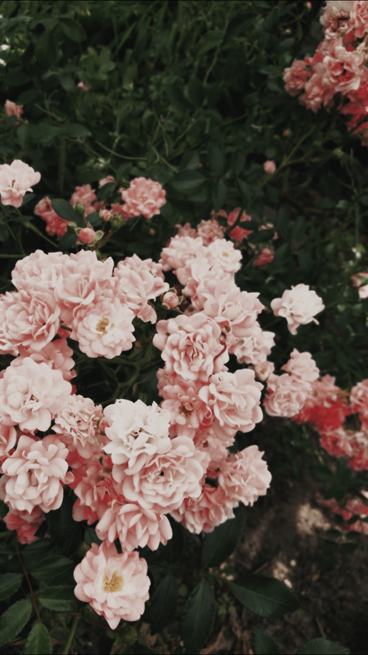 Lockscreen Tumblr In 2020 Flower Aesthetic Iphone Wallpaper