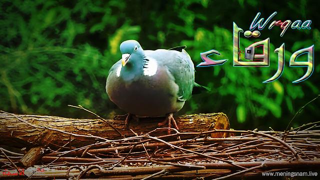 معنى اسم ورقاء وصفات حاملة هذا الاسم Wrqaa Animals Bird