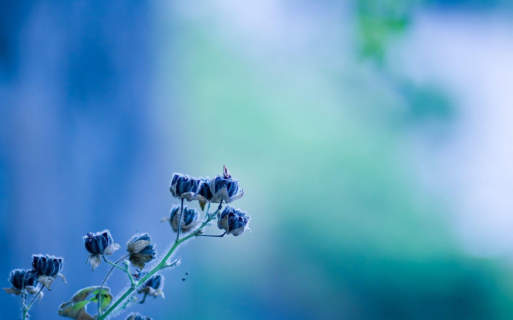 Turquoise wallpaper   Абстрактное, Абстрактная живопись ...