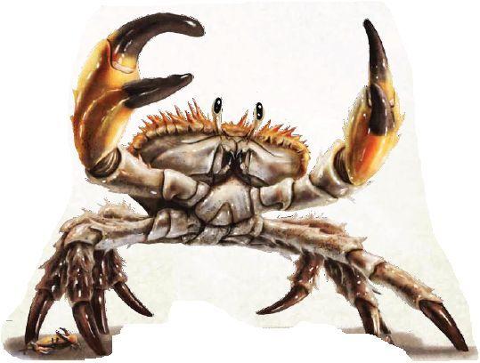 crabe géant dessin - Recherche Google | Crabs animal, Crab, Dnd monsters
