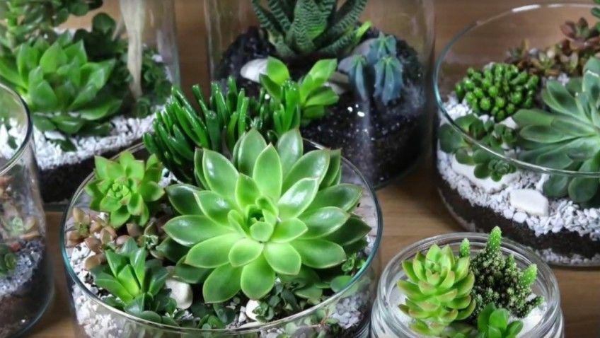 Diy Video Decoration De Succulente Ikea Mini Plants Succulents