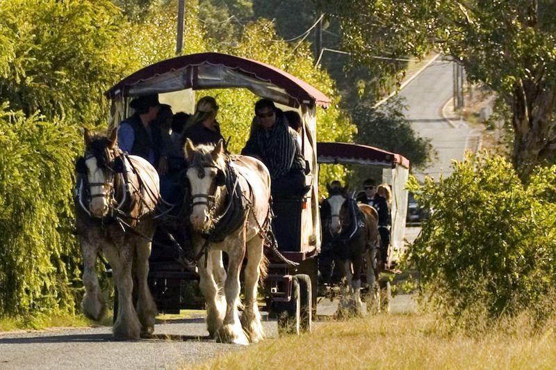 Swan Valley Horse drawn wagon, Perth western australia
