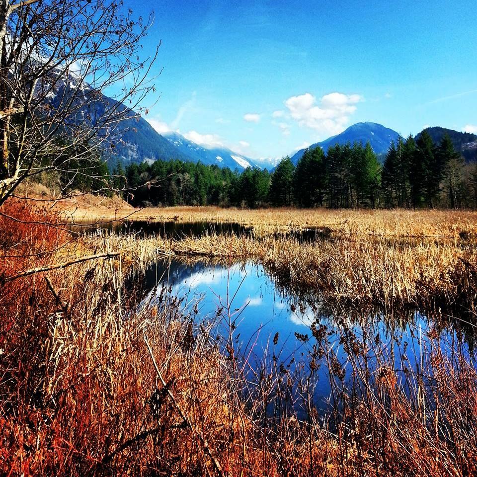 Thacker Marsh, Hope, BC