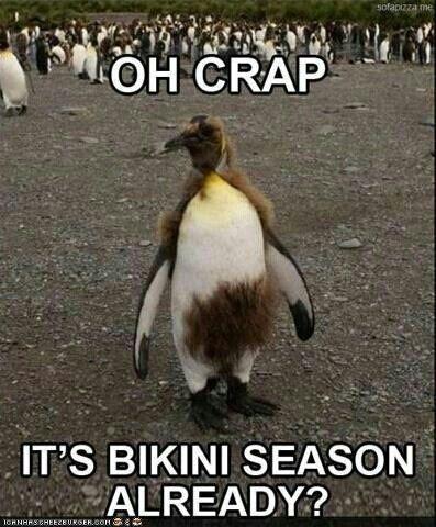 Bikini season, penguin,