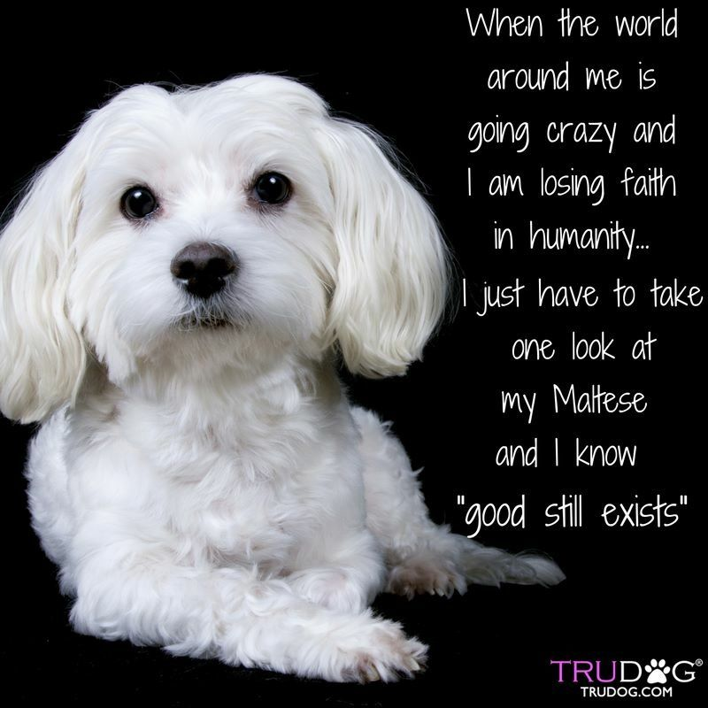 Quotes About Puppies Dogs And More All Things Dog Image By