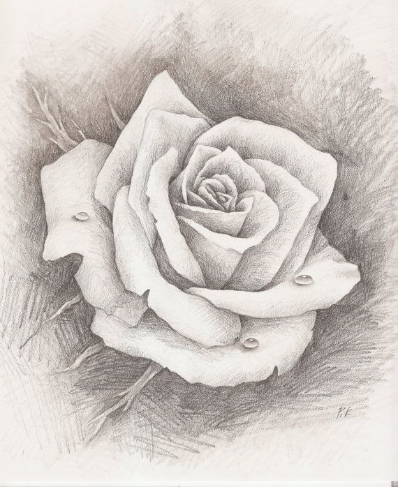 Original pencil drawing rose water drop fine by paulasgalleria 99 00