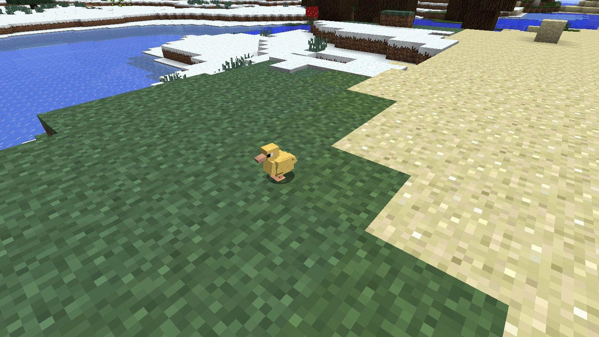 Pin On Ducks 3