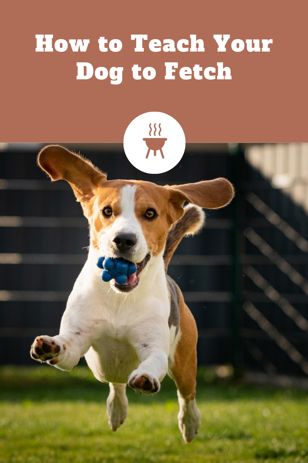 Easy Tips for Teaching your Dog a RELIABLE Fetch! #doglover #dogtraining #doglife #doglover #dogtrainingadvice