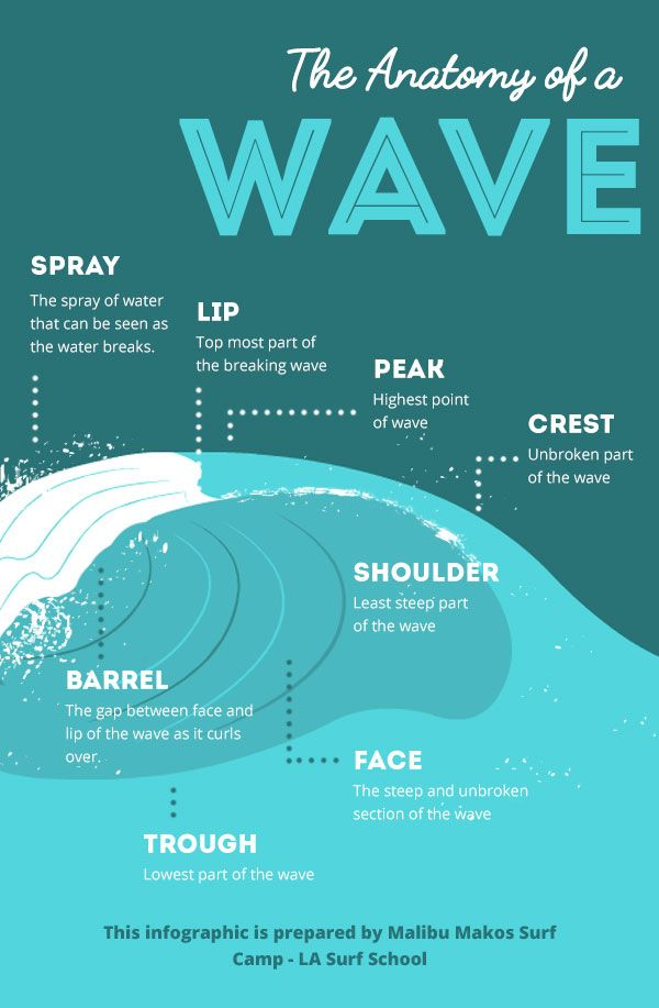 The Anatomy of a Wave [Infographic] | Bodysurfing | Pinterest ...