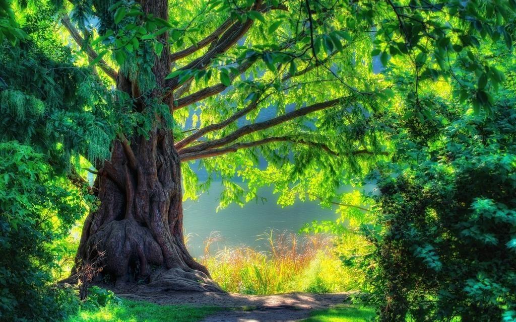 Filipe Moura On Twitter Tree Nature Wallpaper Green Nature Wallpaper Hd Nature Wallpapers