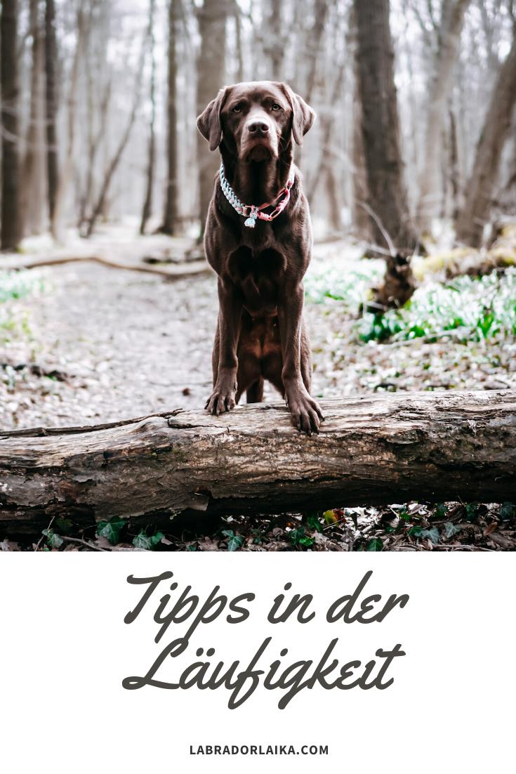 Unsere Tipps Fur Eine Entspannte Laufigkeit Der Hundin In 2020 Tipps Hunde Gesunde Hunde