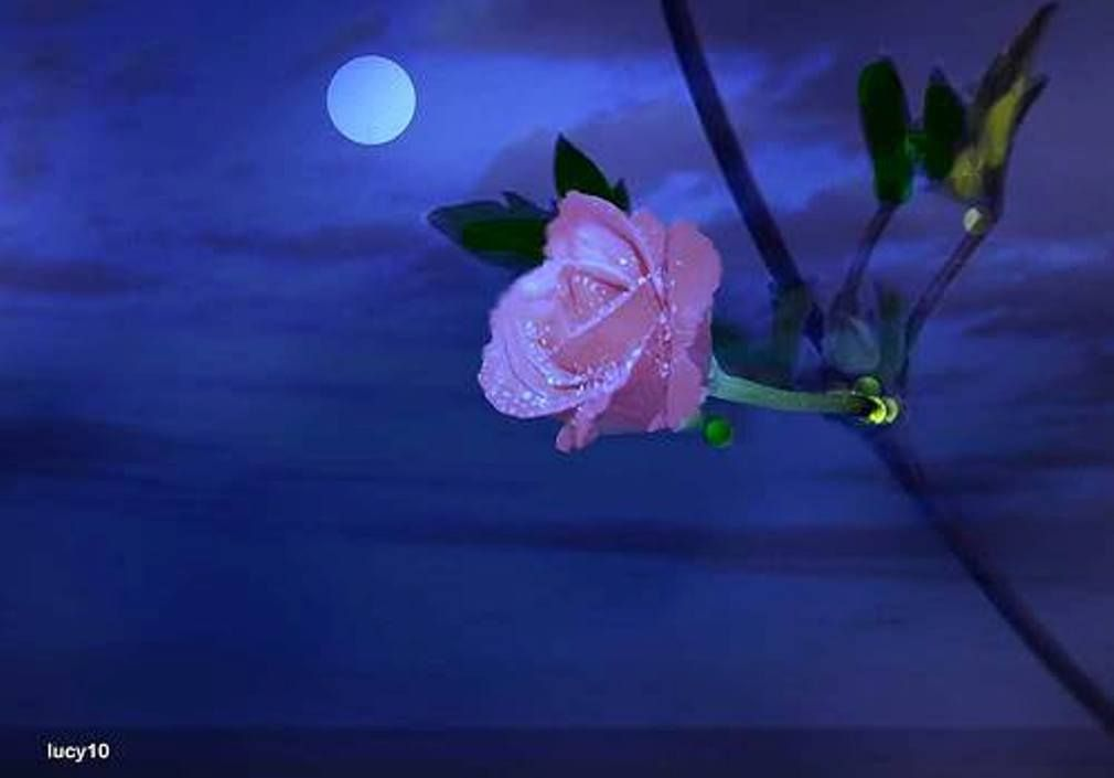 The world shines about me luminous as the moon, smiling like a rose, and a sweet benediction flows through everything existing.                                                                           Hamza El Din