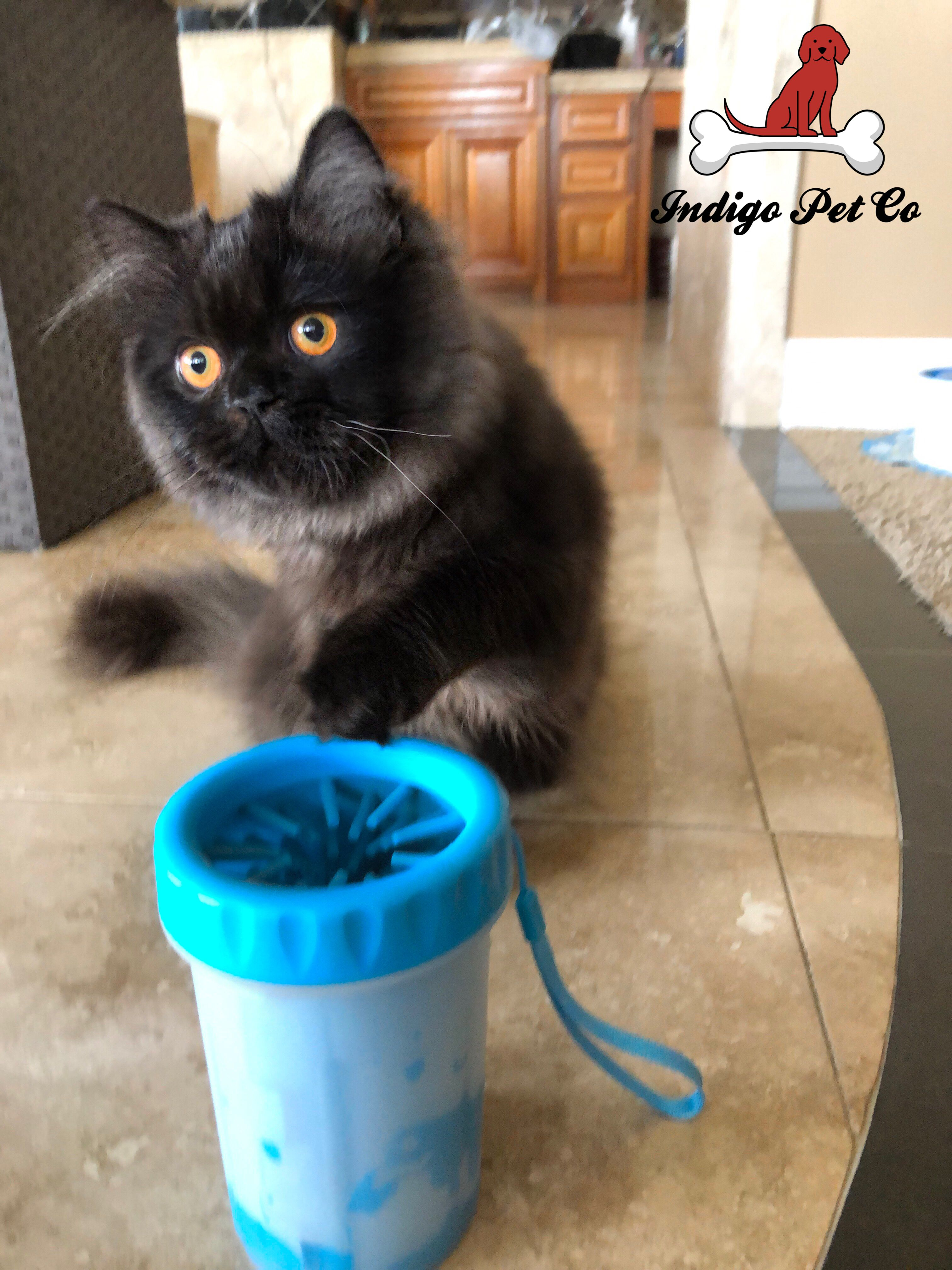 World's Most Effective Pet Paw Cleaner Pet paws, Cats