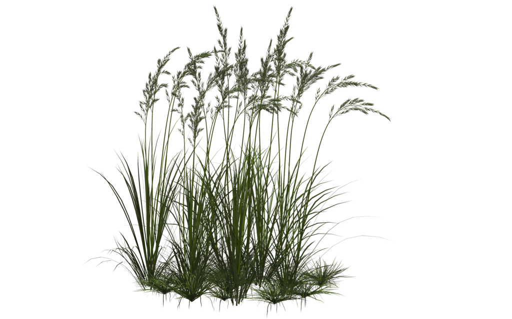 Grass 10 by on deviantart Long grass plants