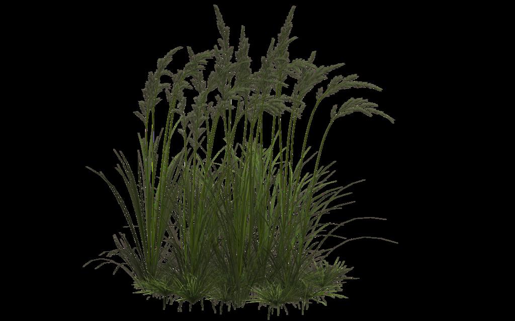 Grass 10 By Wolverine041269 Tree Photoshop Landscape Architecture Graphics Plant Texture