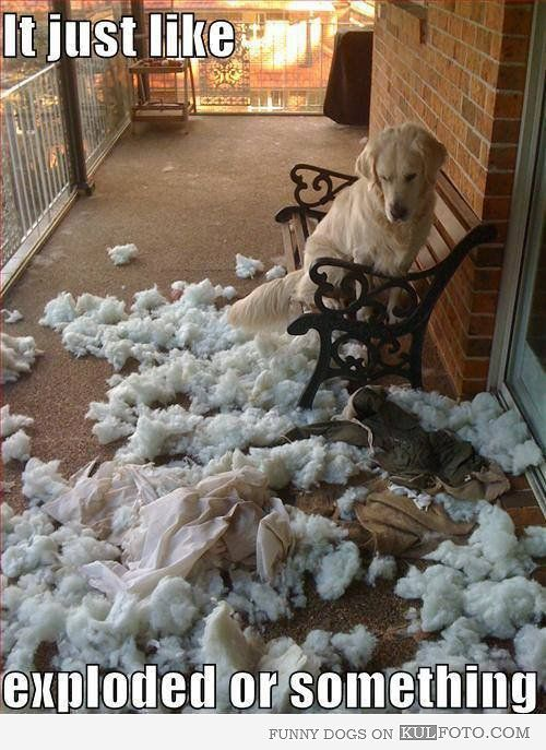 It Just Like Exploded Or Something Funny Dog Looking At A