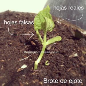Siembra En Semilleros Como Hacerlo Amandomicasa Com Semillero Tallo De La Planta Jardineras Con Palets