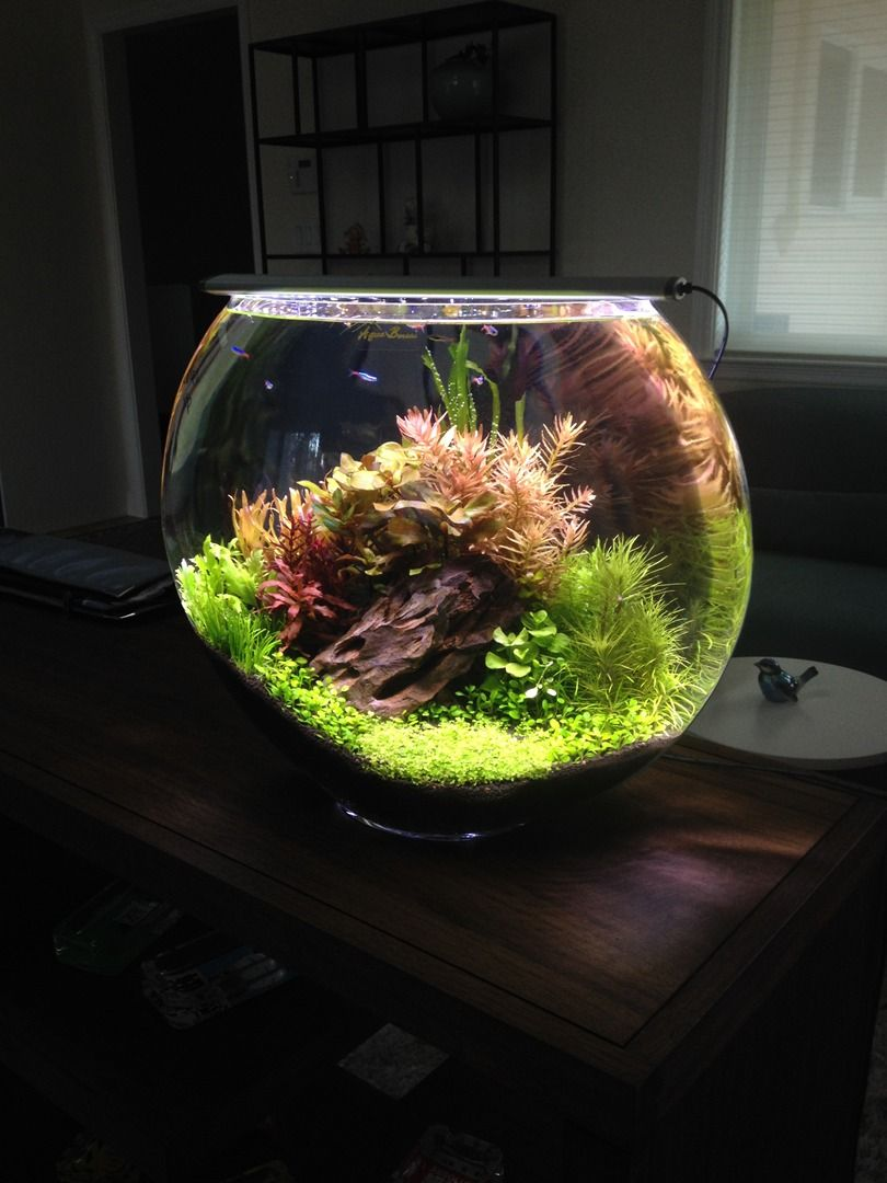 Planted Bowl Fish Tanks