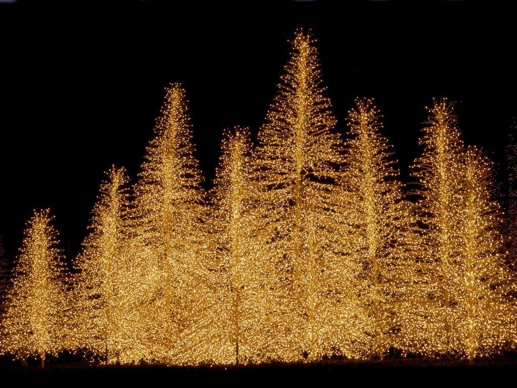 Merry Christmas! | Led christmas lights | christmas lights ...