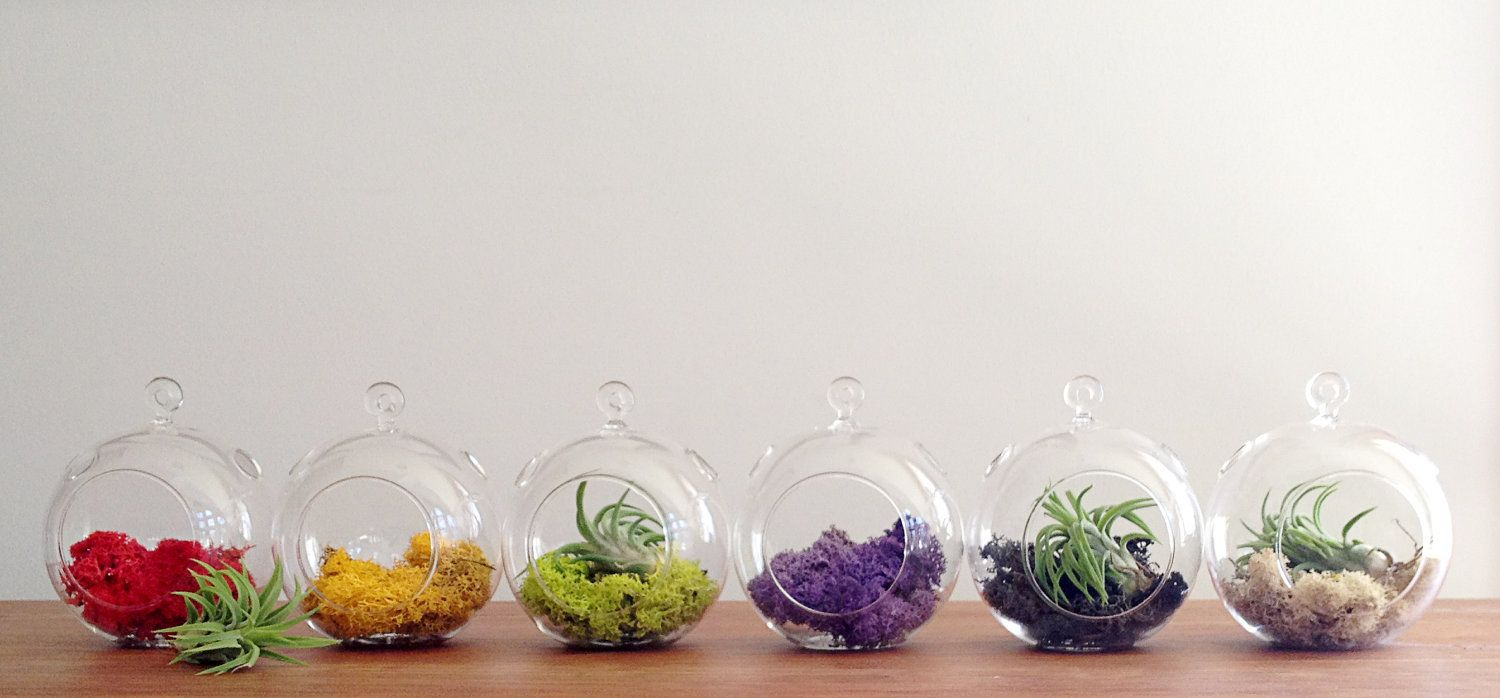 17 best images about desk plant on Pinterest Corks Hobbit home