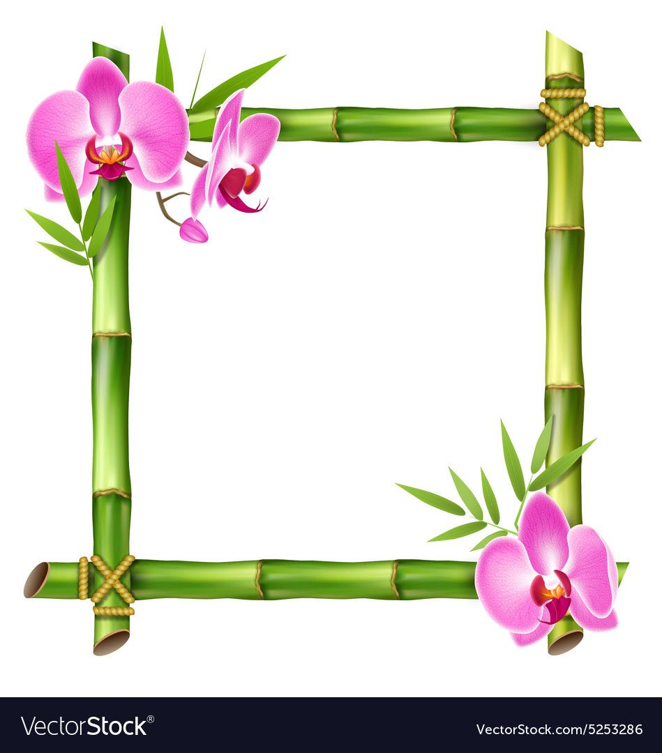 Pin By Maria Johnson On Projects Art Bamboo Frame Orchid Flower Pink Orchids