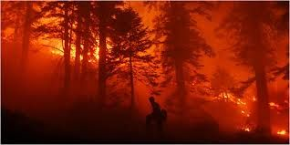 Image result for wildfire pictures