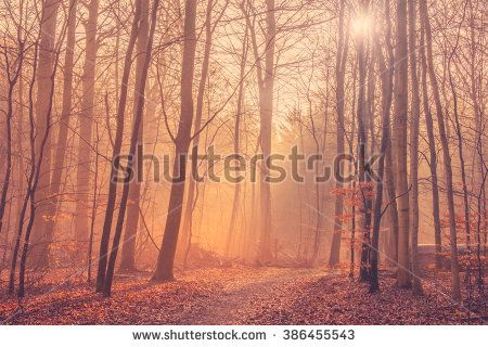 Forest landscape with mist and sunrise in the morning