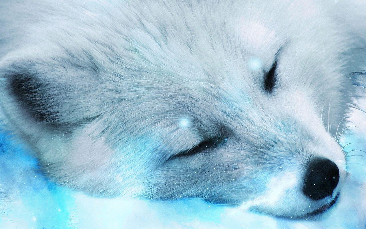 arctic fox close-up wallpaper animal desktop background | animal